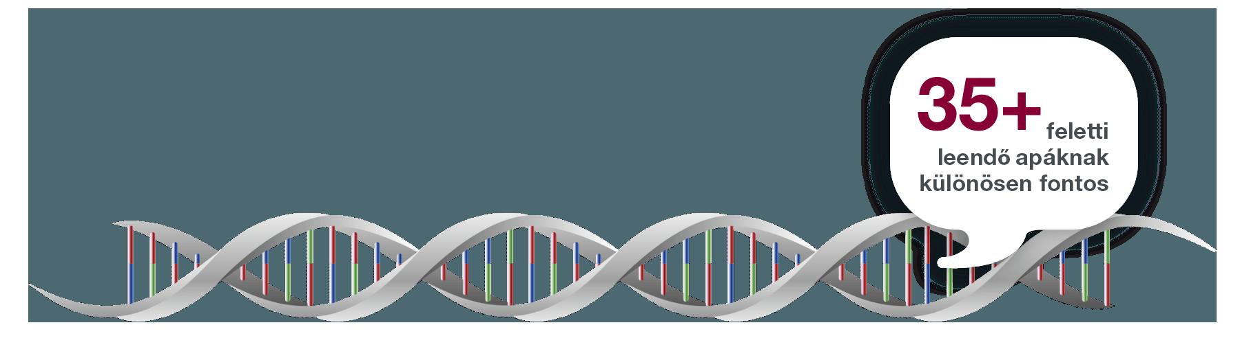 Ép DNS szerkezet